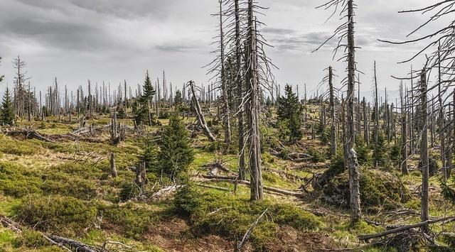 Manfaat Pohon Untuk Alam