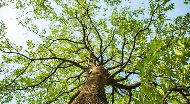 Pentingnya Pohon pada Penanggulangan Banjir